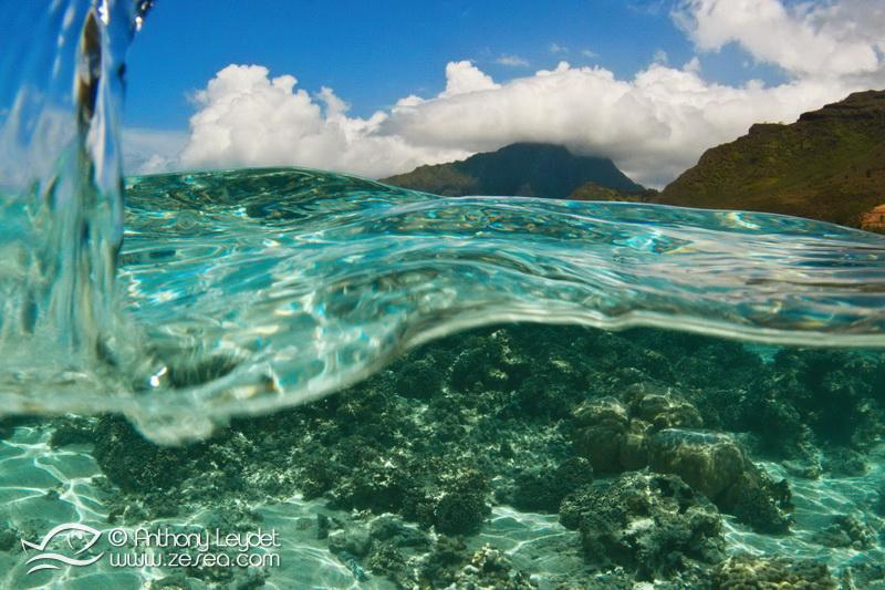 Snorkeling à Moorea