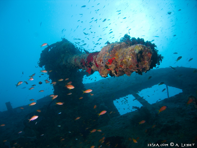 L'épave du Thistlegorm en Mer Rouge