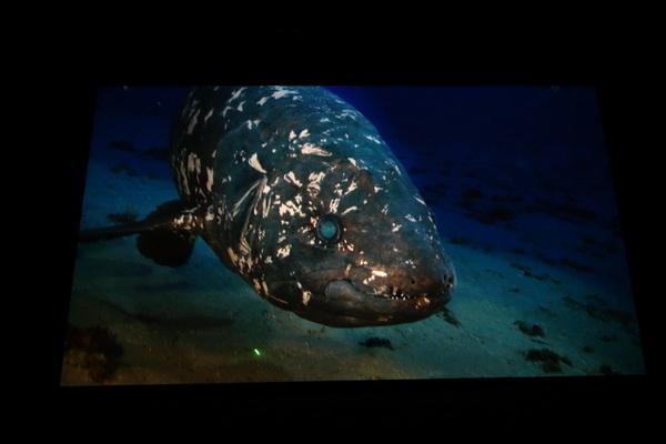"""Image tirée du film """"Le coelacanthe, plongée vers nos origines"""""""