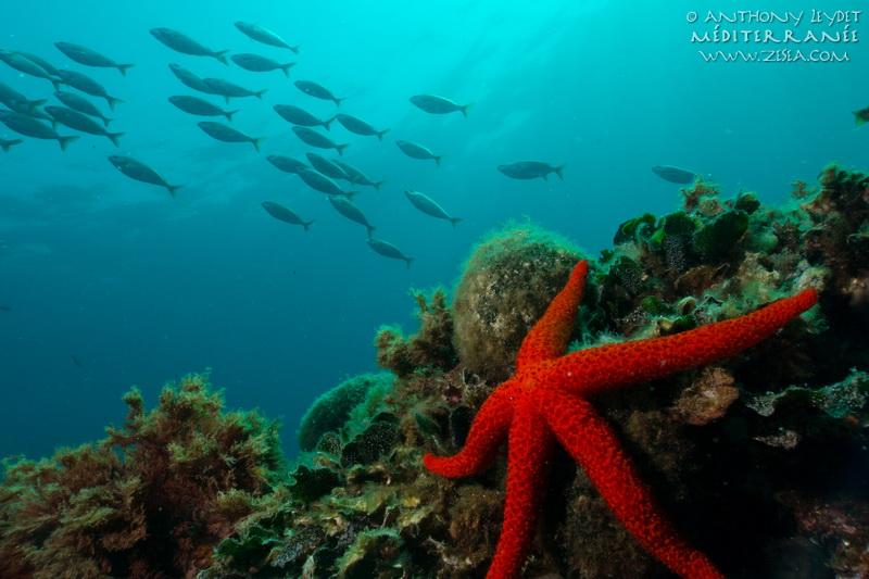 Classification des animaux marins de Méditerranée