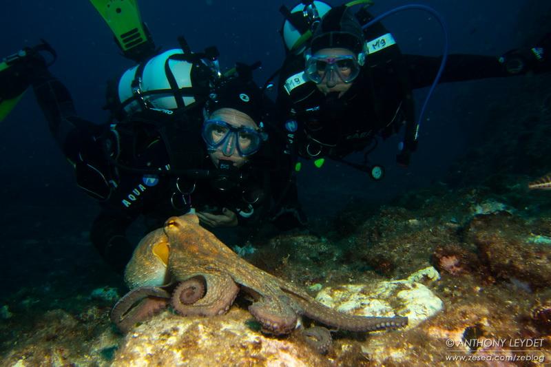 Plongeur bio... un état d'esprit !