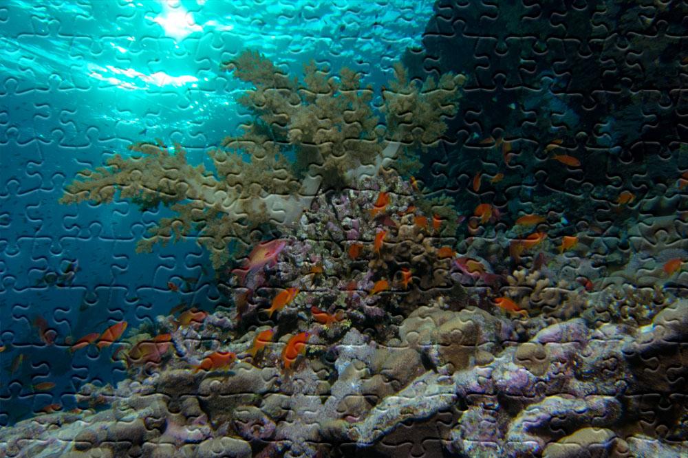 puzzle photo sous-marine