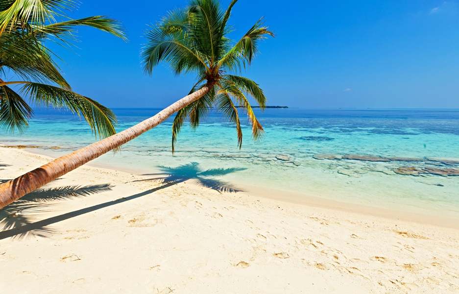 Plonger aux Maldives ( © Shutterstosk)