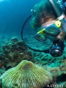 Nadine observe un corail Fungia