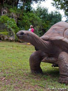 Une tortue centenaire... encore jeune !