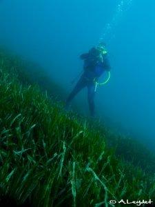 JdS - Sur l'herbier...