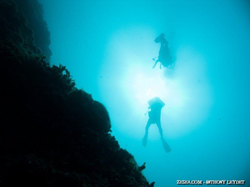 Descente vers le coralligène