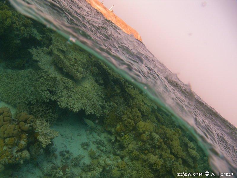 Snorkeling Petit Gubal 2