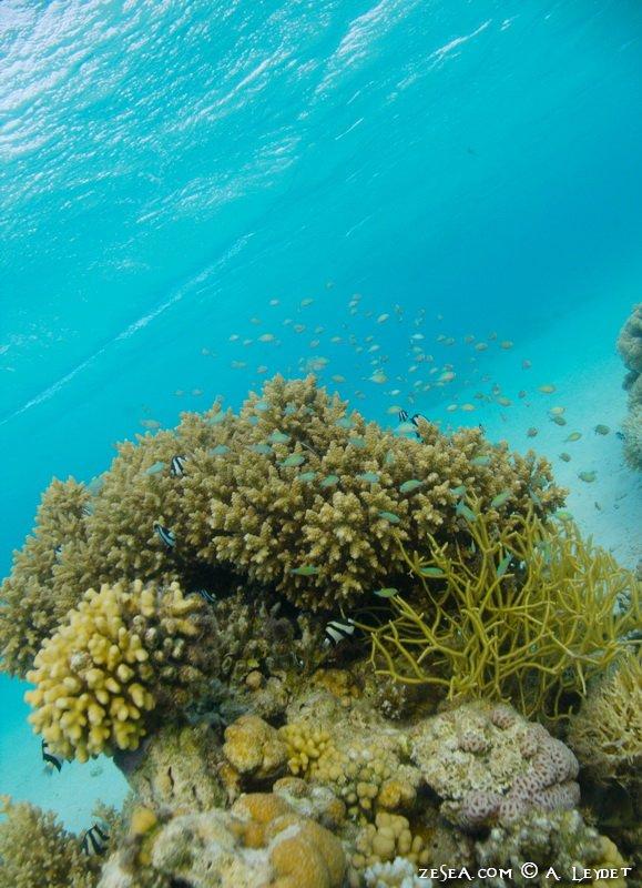 Snorkeling Petit Gubal 9