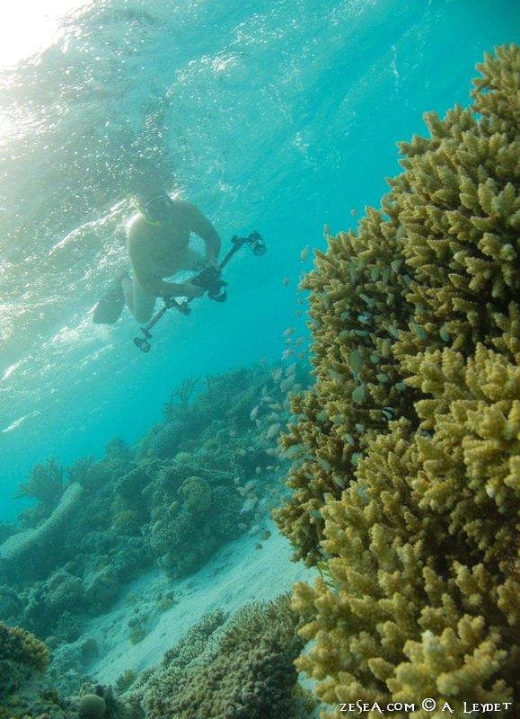 Snorkeling Petit Gubal 10