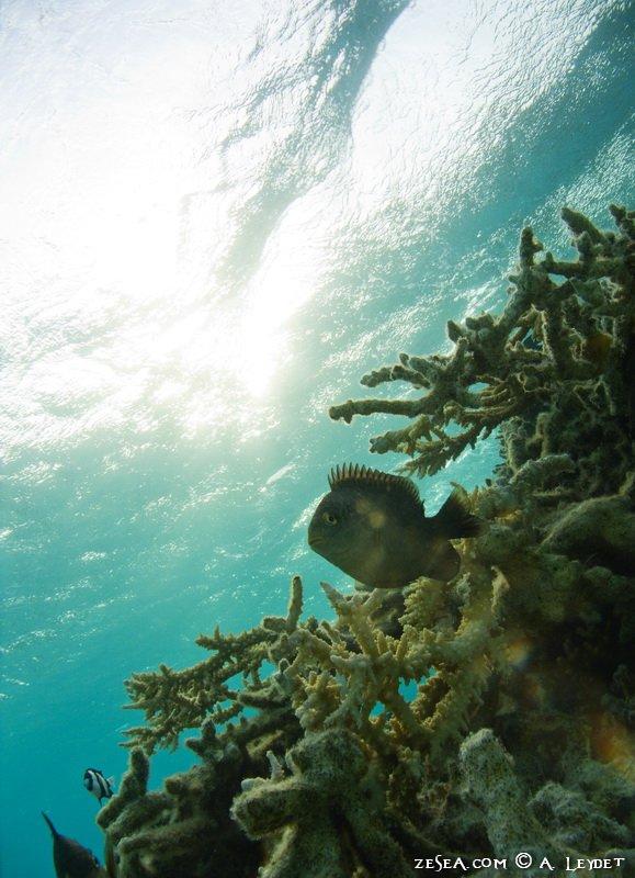 Snorkeling Petit Gubal 11