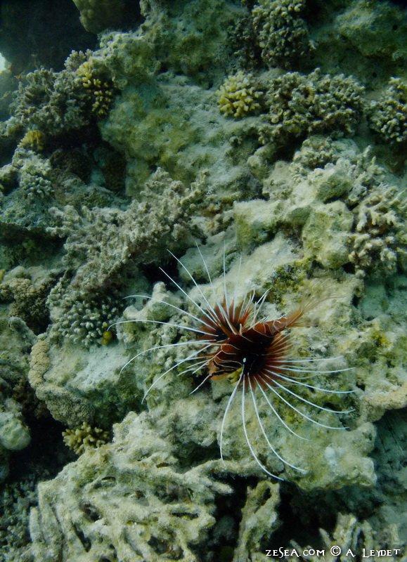 Snorkeling Petit Gubal 13