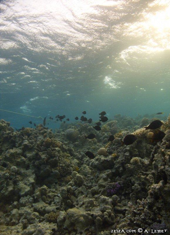 Snorkeling Petit Gubal 14