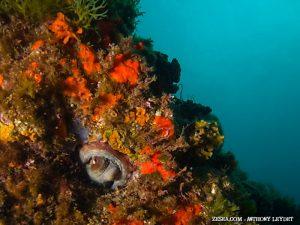 Méditerranée, pôle de biodiversité