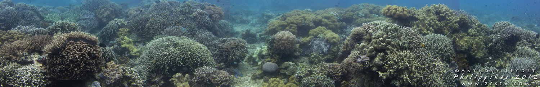 Panoramique sous-marin Philippines