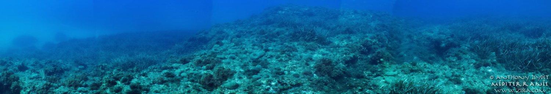 Une vue panoramique sous-marine
