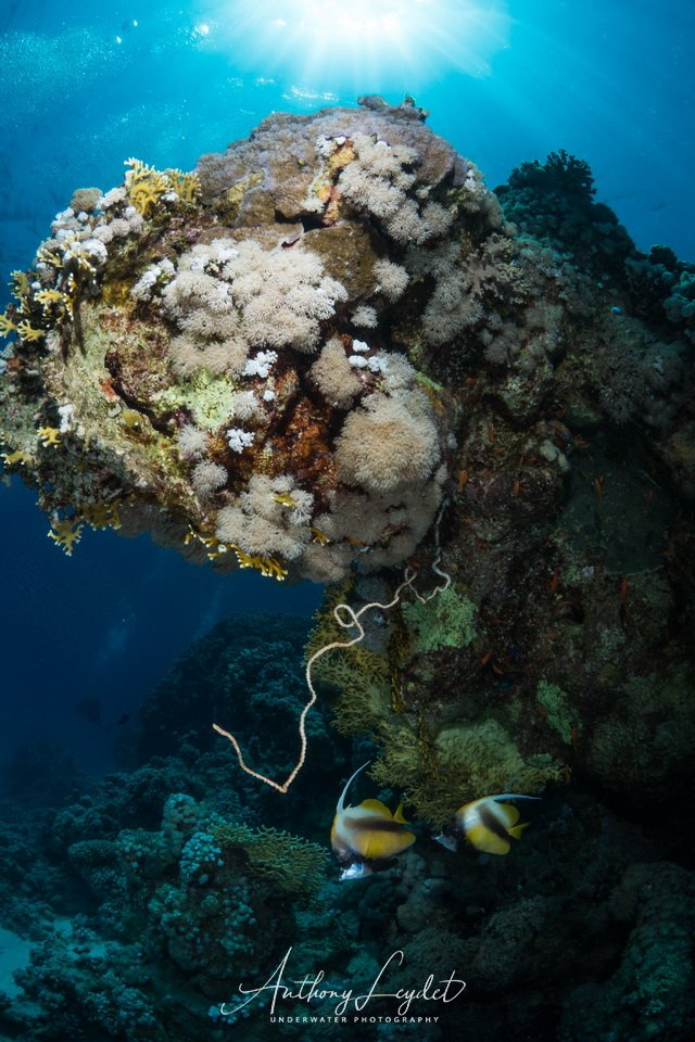 conseils pour réussir ses photos sous-marines