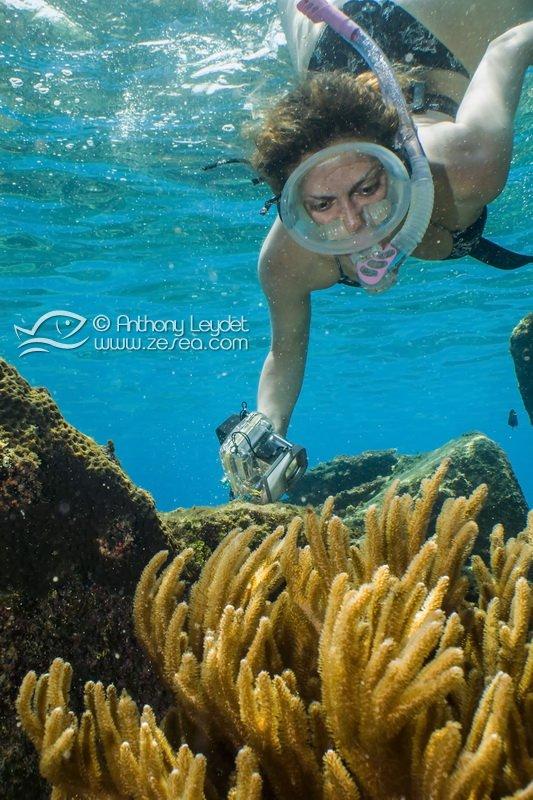 La pratique su snorkeling aux Perhentians