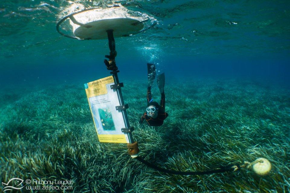Snorkeling à Port-Cros - Les balises