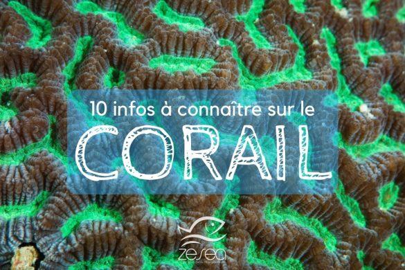 Le Corail, 10 infos à connaître