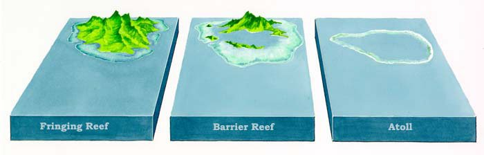 3 types de récifs coralliens