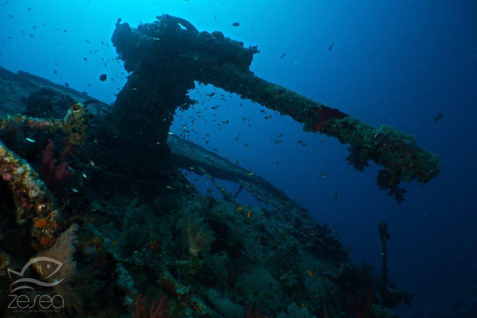 Le canon du Thistlegorm en Mer Rouge
