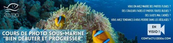 Cours de photographie sous-marine en visio