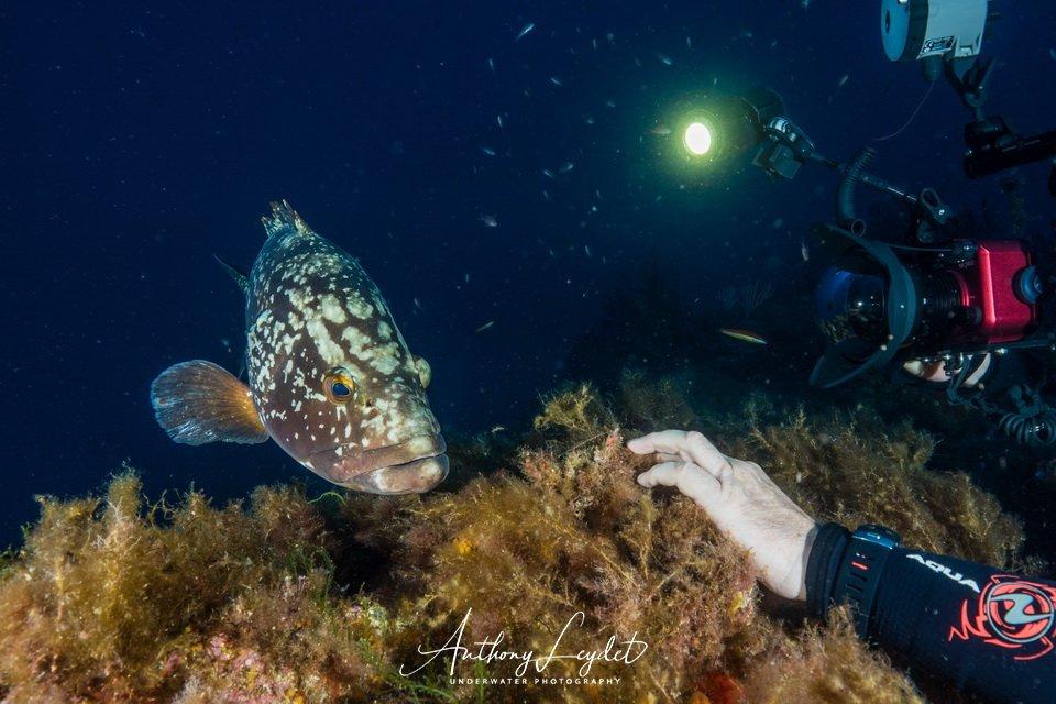 Mérou - Matériel de photo sous-marine