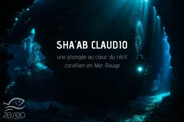 Shaab Claudio, une superbe plongée en Mer Rouge