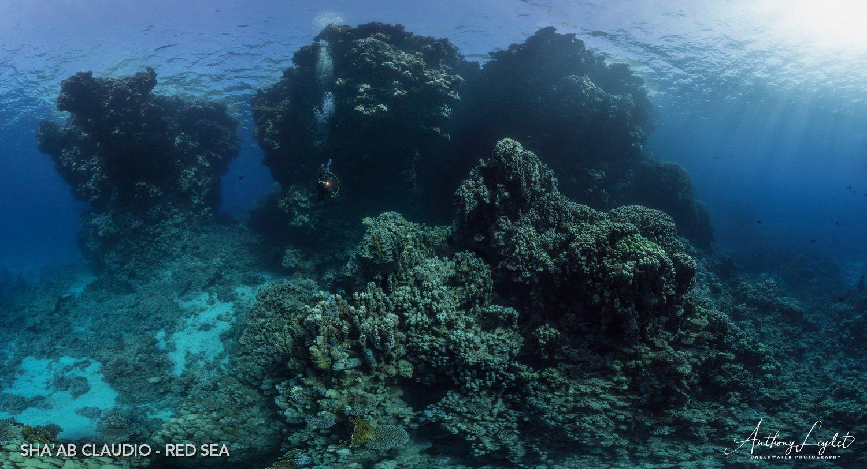 Le récif de Shaab Claudio en Mer Roupe