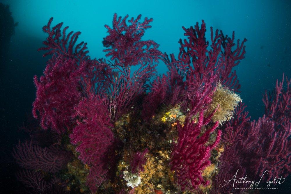 Les Moyades dans le Parc National des Calanques, un des plus beaux sites de plongée de Marseille