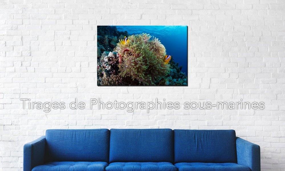 Boutique de photographies sous-marines