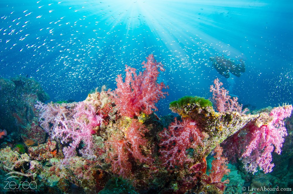 Wonderful and beautiful underwater world with corals, fish, scuba diver and sunlight