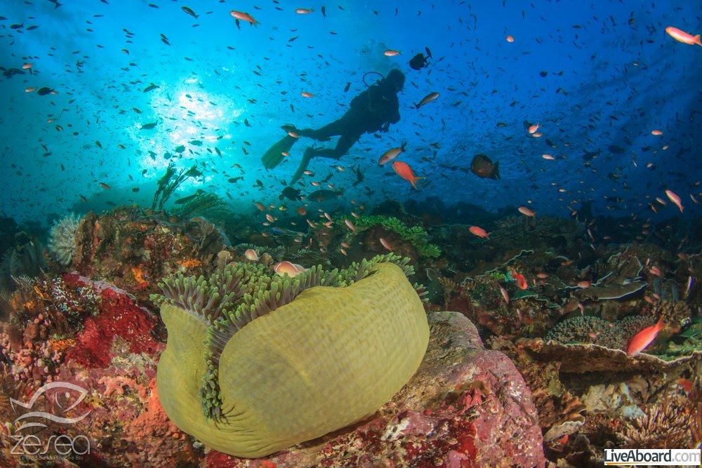 Plonger en mars en Australie de l'Ouest