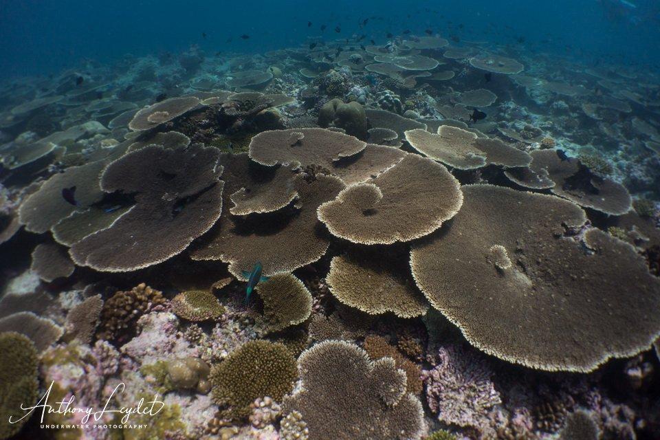 Plonger en février aux Maldives