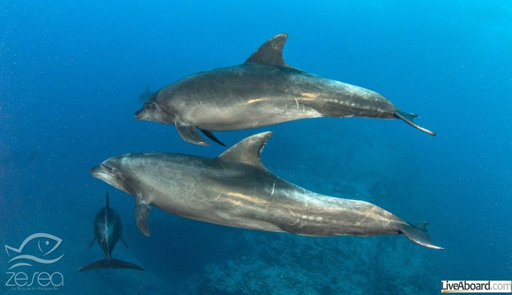 Plonger en mars avec les dauphins à Socorro