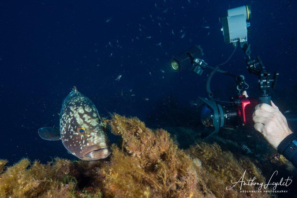 Photo sous-marine : le flash dérange t-il les poissons ?
