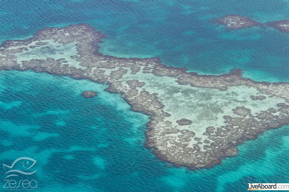 aerial view of the barrier reef of the coast of San Pedro, Belize. with grassy dark spots on the turquoise waters