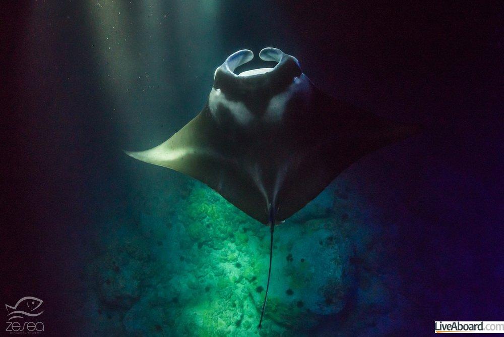 Plonger en juin à Hawaii avec les manta