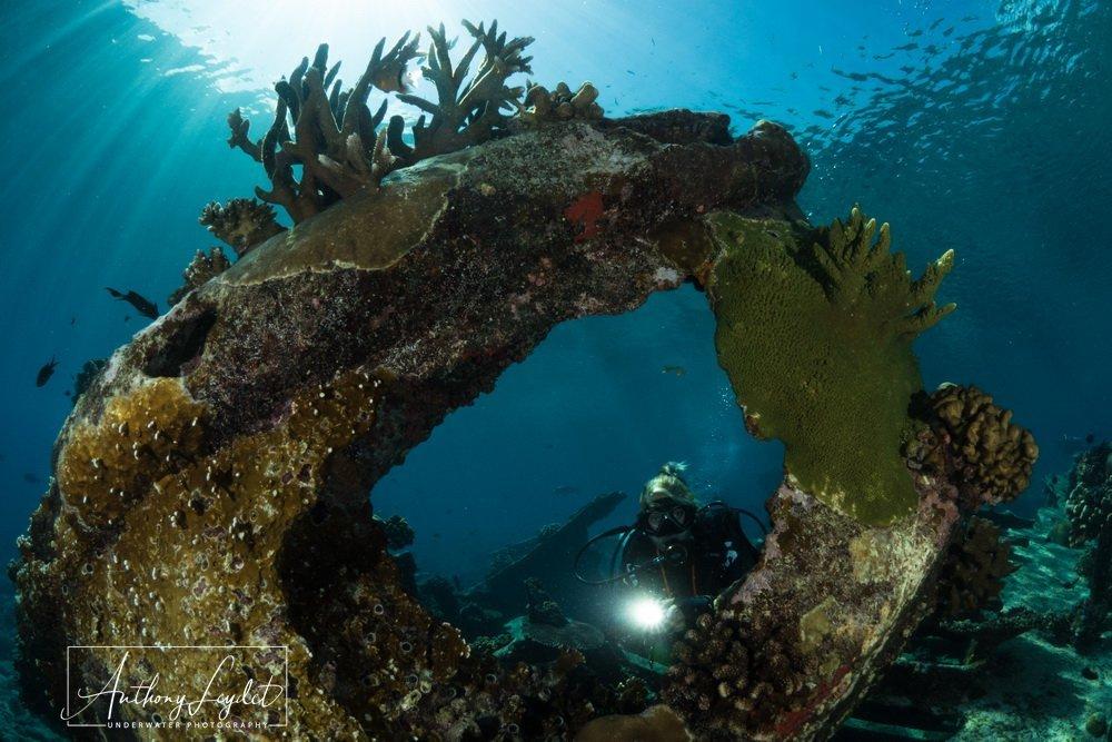 Malayan wreck in Tubbataha