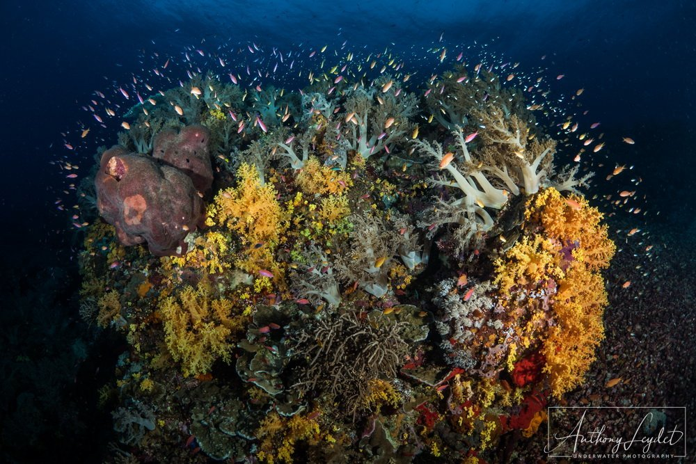 The beauty of the Tubbataha reefs