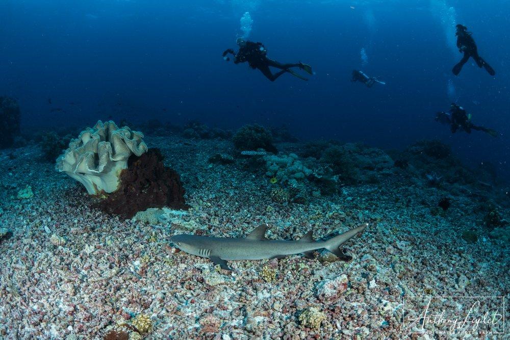 Le site de Shark Airport à Tubbataha