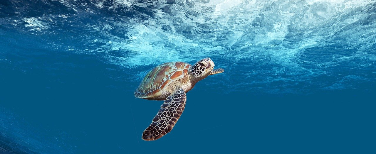 plonger au Belize