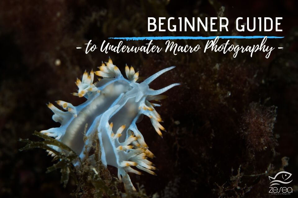 Super Macro Underwater Photography Manual Guide