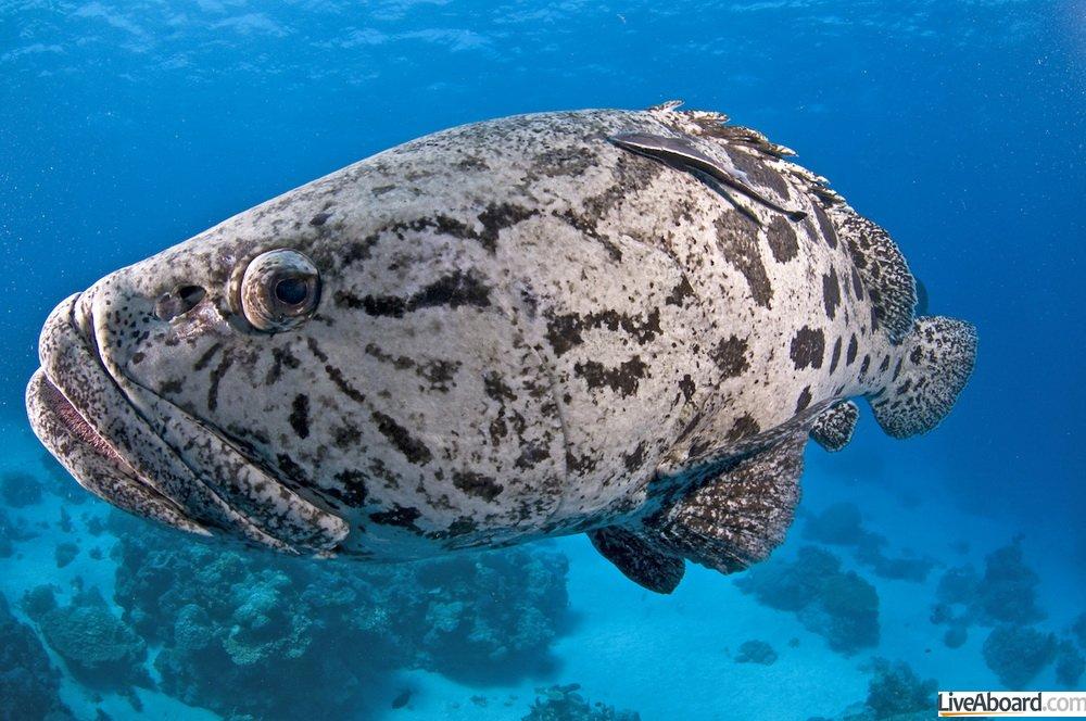 Plonger en octobre en Australie