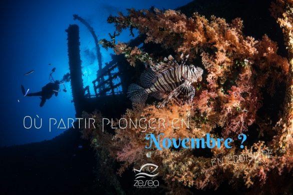 Où partir plonger en novembre en croisière ?