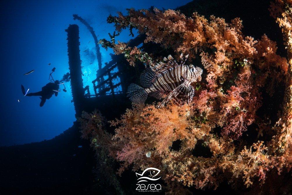 poisson-lion sur l'épave du Numidia en Mer Rouge