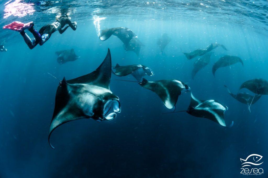 Les Maldives, destination parfaite pour les plongeurs confirmés !